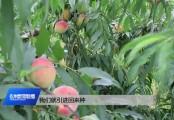 20200812永州新闻联播