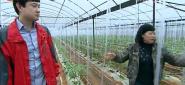 品读永州之设施农业快乐农庄(下)