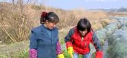 品读永州之种芋大王的发财梦(上)