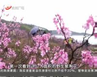 20170318永州新闻联播