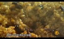 舌尖上的幸福永州——金洞荷叶鸭