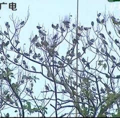 品读永州之护鸟人家(上)