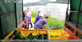 永州有機蔬菜的430公里供港之旅