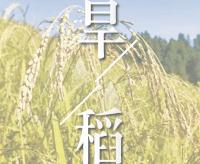 第二期《巧保種稻 ?戰天斗地防鼠鳥》