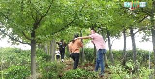蓝山百叠岭茶文化生态旅游区茶园艺术节在百叠岭景区开园