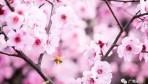 2018永州版最强赏花地图新鲜出炉,一起去看花花世界吧!