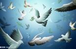 【小學】一年級學生暑假生活日記范文:鴿子