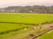 2019年中國農民豐收節湖南主題活動永州東安分會場宣傳片