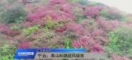 (大美永州)寧遠:高山杜鵑迎風綻放