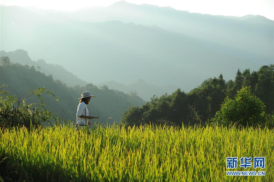 (新华全媒头条·图文互动)(9)咱们村里的年轻人——记奋战在贵州脱贫攻坚一线的青年
