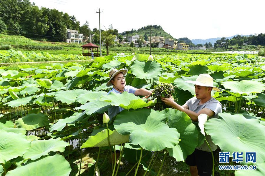 (新华全媒头条·图文互动)(4)咱们村里的年轻人——记奋战在贵州脱贫攻坚一线的青年
