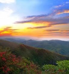 浴火重生 永州陽明山五一開園 邀您賞一山開得認真的杜鵑!