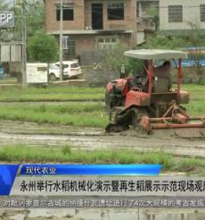 (現代農業)永州舉行水稻機械化演示暨再生稻展示示范現場觀摩會