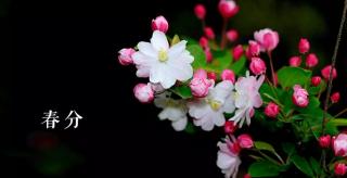 今日春分:海棠依旧 应是绿肥红瘦!