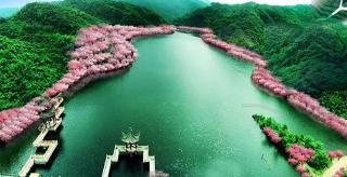 四月最值得期待的陽明杜鵑花海 今年你會去賞嗎?