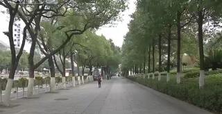 冷水滩:城区树木涂白防冻防虫害
