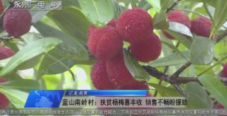 (記者調查)藍山南嶺村:扶貧楊梅喜豐收 銷售不暢盼援助