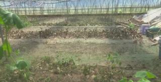 (灾后重建)东安:省农科院专家指导农户灾后自救