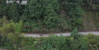 (护林防火)陶楚艳:扎根大山32载  守护森林20万亩