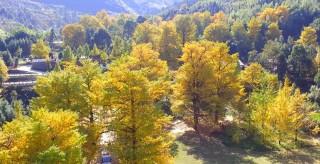 桐子坳-秋天的童话