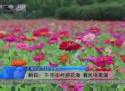 新田:千年古村游花海 看民俗表演