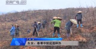 东安:春寒中掀起造林热