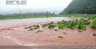 江華:洪水侵襲多個鄉鎮多部門聯動救災
