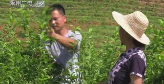 (鄉村振興)藍山:果樹下套種西瓜 一地雙收效益好
