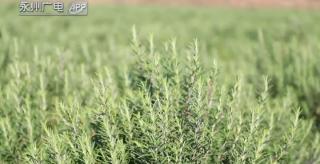 (精准扶贫在永州)零陵:公司 合作社 农户 打造扶贫生态链