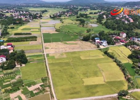 永州:做大做強主導優勢產業 鄉村振興再升級