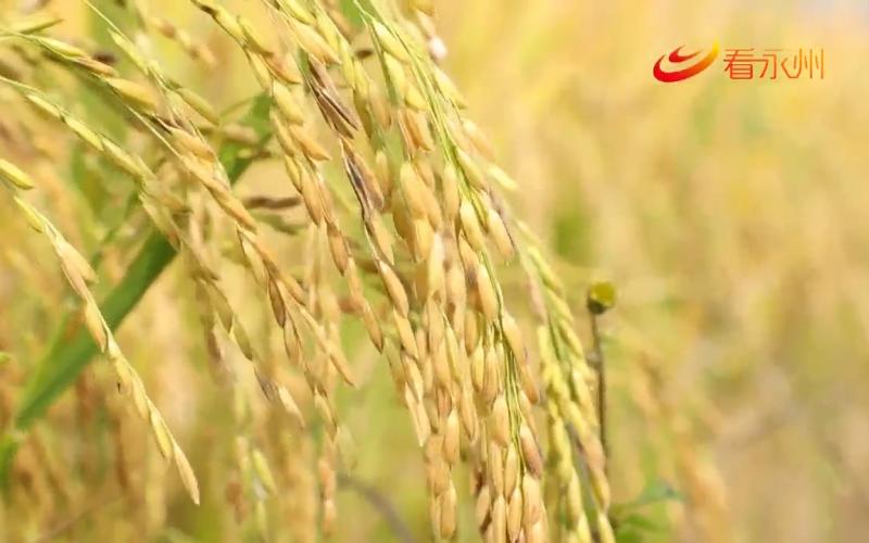 (秋冬生產)本月23號開始天氣轉好 種植戶提前規劃抓緊搶收